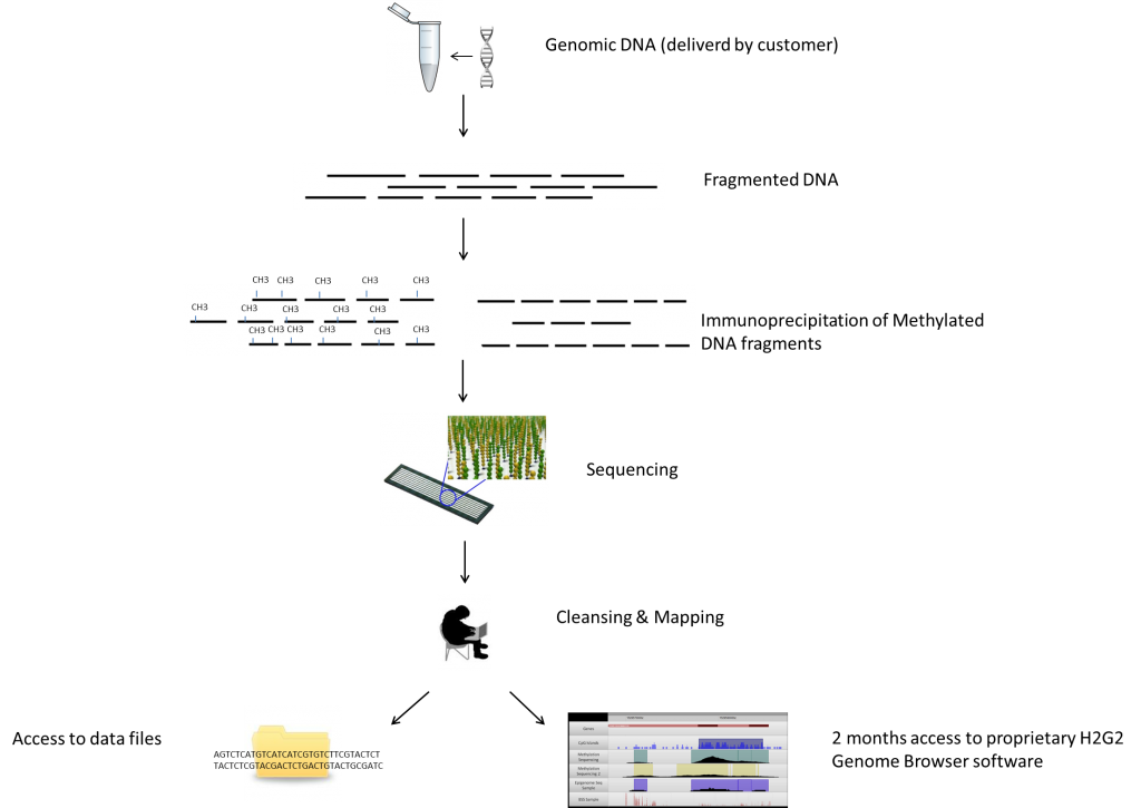 MeDIP-sequencing-workflow